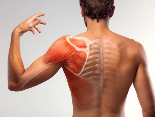 Боль в лопатке и между лопаток при остеохондрозе