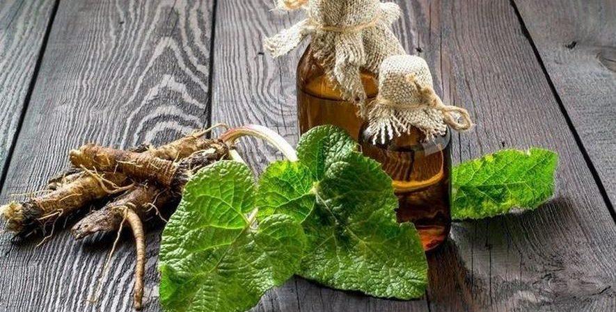 Народные рецепты с лопухом и растительным маслом