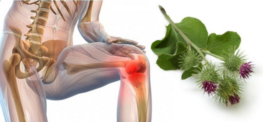 Применение лопуха при болезнях суставов