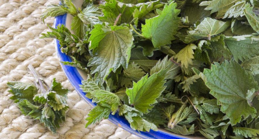 Травяные настои для лечения грудного остеохондроза