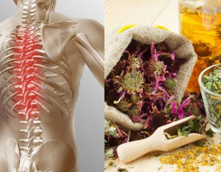 Лечение грудного остеохондроза народными методами